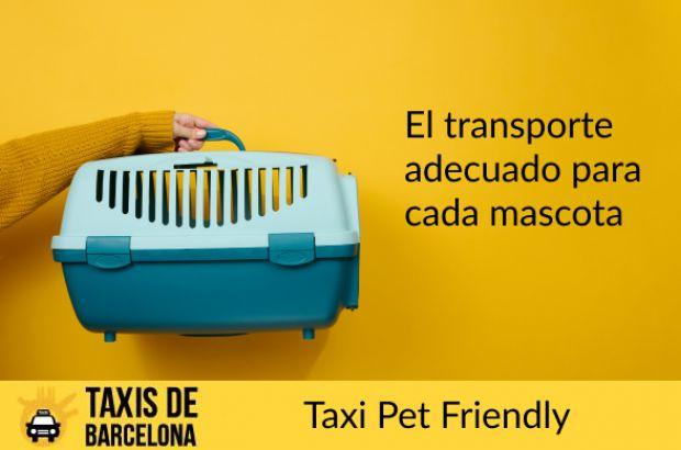 reserva taxi barcelona online dating